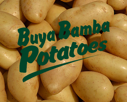 Potatoes & Onions